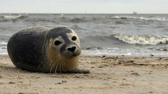 Rely On World Heritage More Seal Puppies Than Ever In The Wadden