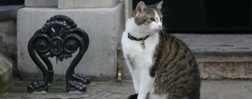 Kater Larry, der in Number 10 Downing Street wohnt. Foto: dpa